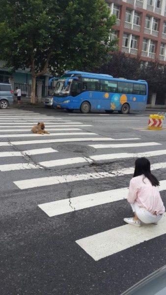 כלב באמצע הכביש והצעירה הסינית